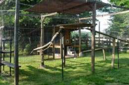 bird cage plan woodworking plans and information at