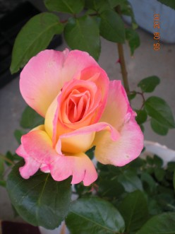 24 Plants With Symbolic Meanings