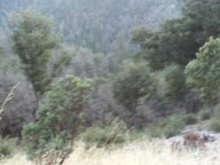 San Bernardino Mountains Trip - With Pictures of Highway 18 Included.