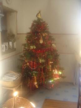 The Christmas tree 2011 in full sunshine