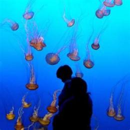 Jellyfish at the Mystic Aquarium