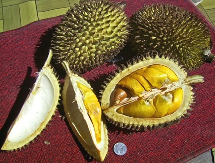 Durian fruit ready to eat