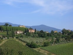 Vineyards and olive groves in Tuscany. Photo by Adventurous Wench (flickr)