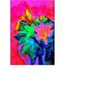 nikki1 profile image