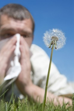 The Complete Guide To Hay Fever - Symptoms, Cures, Remedies, Top Tips