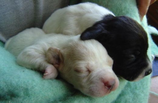 Our cute pups shortly after birth