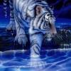 ash_tiger07 profile image