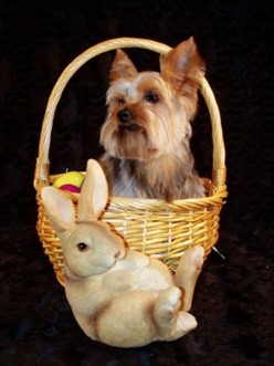 Jesse in his Easter basket