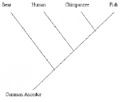 fig1b. Cladogram with 4 species added