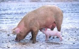 H3N2 Swine