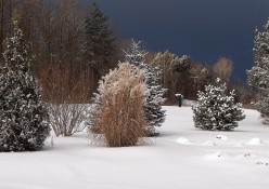 Look, There's A Winter Wonder Garden In My Yard