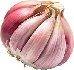 Garlic controls fungus infections: Thrush (Candida) & Athlete's foot (Tinea)