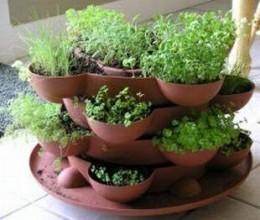 photocredits: houseplantsforyou.com