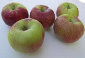 Paula Red Apples