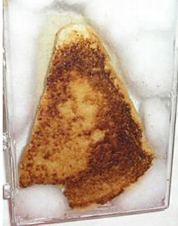A seller offered a grilled cheese sandwich upon which the Virgin Mary had appeared to her  and the strange thing is, she genuinely seemed to believe it. This item, unbelievably, sold for $28,000. Some people just have too much money to waste, dont th