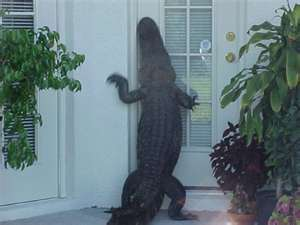 """Knock-knock. """"Who's there?"""" Your roommate. I forgot my keys, let me in."""