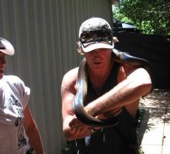 Salty Mick snake wrestling while Crocodile Blondee looks on.