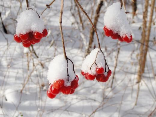 SNOWY AMERICAN CRANBERRIES