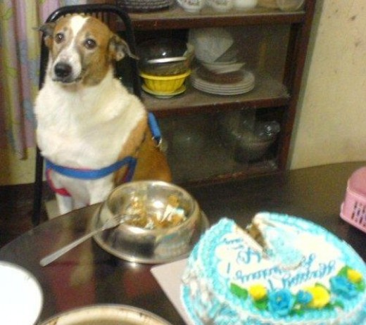 Peso's 9th Birthday, it was July 27th midnight, dog was frowning because I came home late from overtime