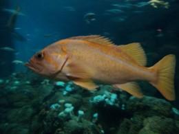 Fish Swimming in Large Reef Tank