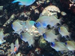 A School of Tropical Fish