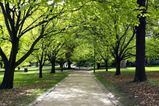 Kings Domain, Melbourne. This city is located amidst parklands and is well known in Australia as the Garden City