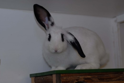 www.animalfriendsrescue.org