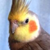 heanders profile image