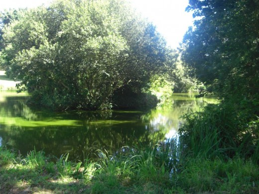 Les Rouvets Coarse Fishing Lake