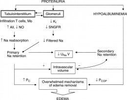 Mechanism of Edema and edema removal