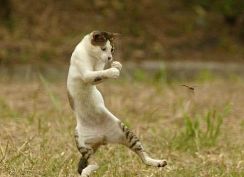 One Agile Kitty Cat!