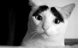 It's just better that cats don't have eyebrows, don't you think?