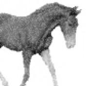 MitkowskiEquine profile image