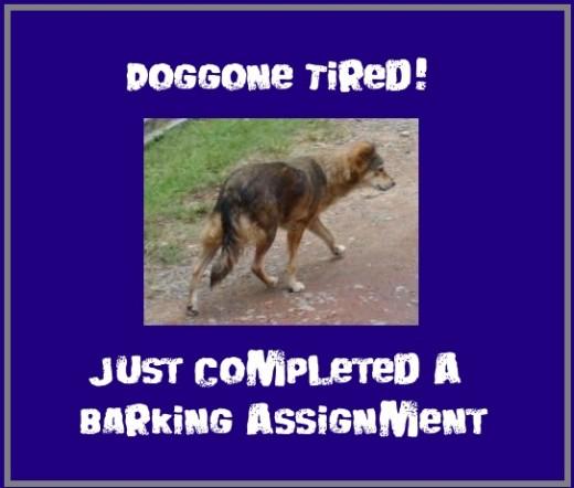 woof! woof! - doggone tired!
