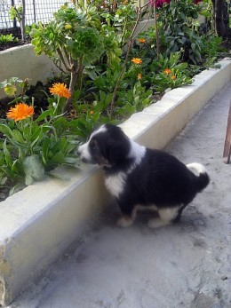 A cute dog enjoying his visit of Harsil in Uttranchal.