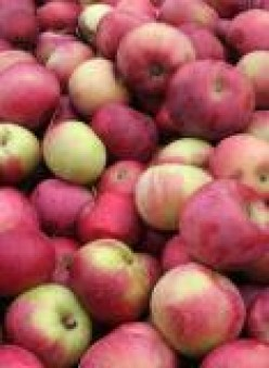 Applesauce Nut Bread recipe
