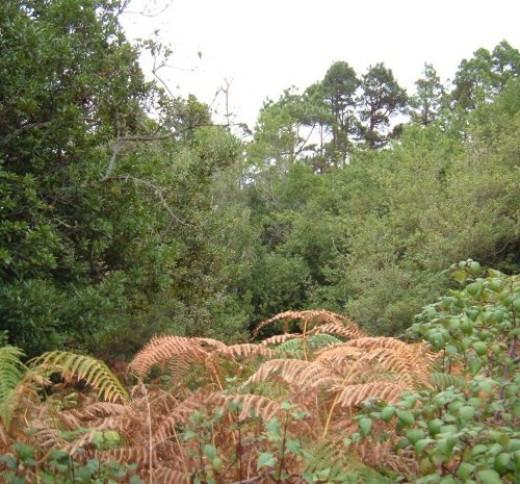 Woods in El Tanque
