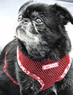 The Right Harness for Your Dog