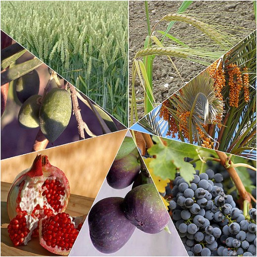 The seven species of fruit of Israel, which are celebrated on Tu b'Shvat.