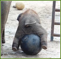 Ringling Conservation Center Elephant Nursery
