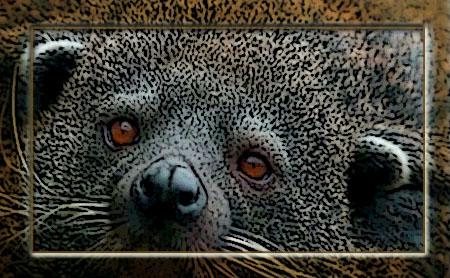 Poster of a cute Binturong face up close