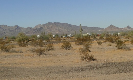 some of the small bushes and plants that live out here in the desert.