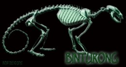 Binturong skeleton poster