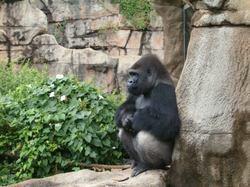 Going to the Zoo (again even!) is a great idea