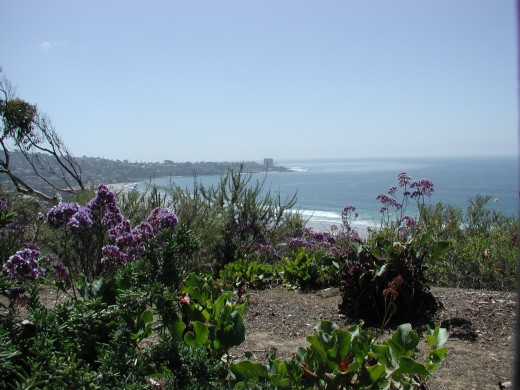 A view of San Diego from the Birch Aquarium