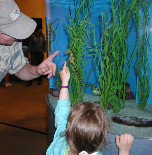 Seahorses and more at Birch Aquarium