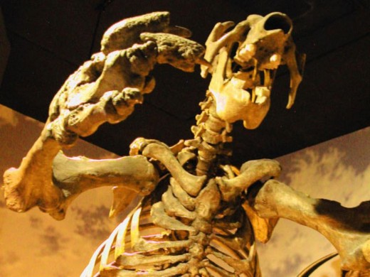 Skeleton of giant sloth at the Southwest Florida Museum of History