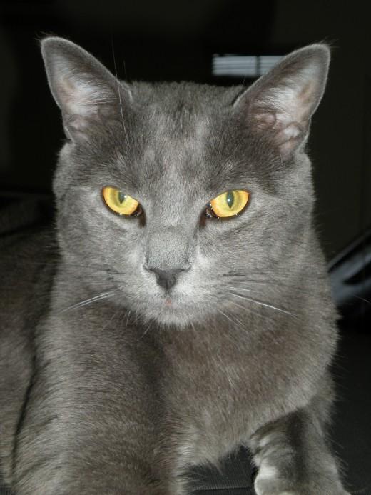Cats will eat birds-especially this cat.