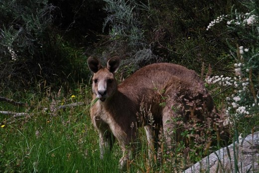 Local wildlife I met at Thredbo River