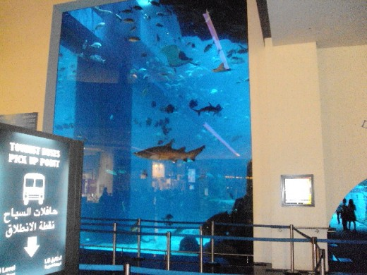Variety of fishes inside the aquarium